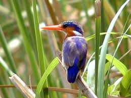 birdwatching-gambia